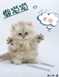 懒猫猫的爱情
