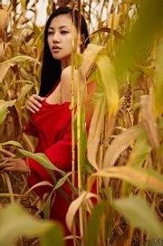 玉米地里的春天