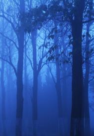 迷雾中的探寻