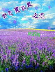 紫色薰衣草之恋