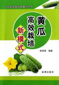 黄瓜高效栽培新模式