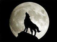 穿越异世做狼族
