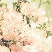 最爱喇叭花